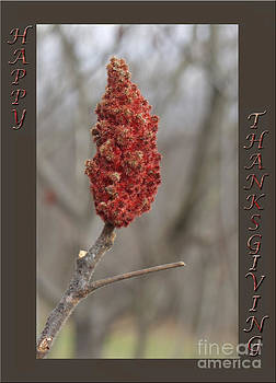 Andrew Govan Dantzler - Autumn Sumac  Thanksgiving Greeting Card #2