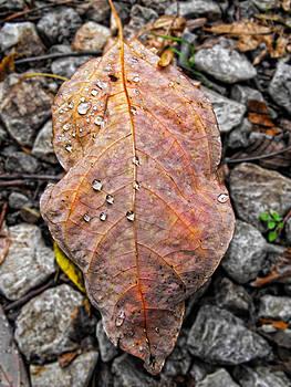 Kristie  Bonnewell - Autumn Tears