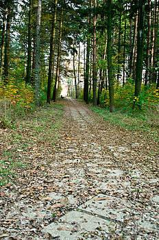 Autumn trail by Presiyan Petrov