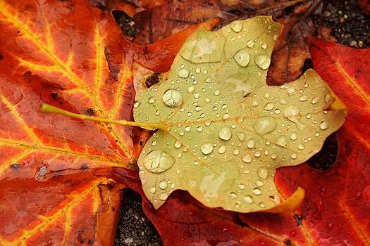 Autumn treasures by Matthew Green