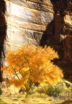 Autumn Tree Canyon De Chelly by George Hodlin