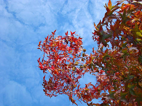 Baslee Troutman - Autumn Trees art prints Blue Sky White Clouds