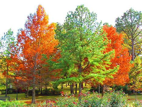 Autumn Trees by Evgeniya Sohn Bearden
