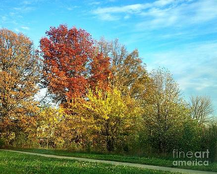 Autumn Trees by Jeremy Linot