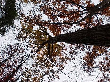 Autumn Trees by Karolina Olszewska