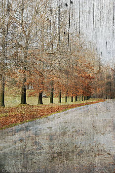 Autumn Trees by Misty Blankenship
