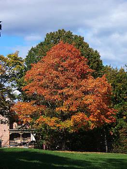 Autumn Trees by Valerie Longo