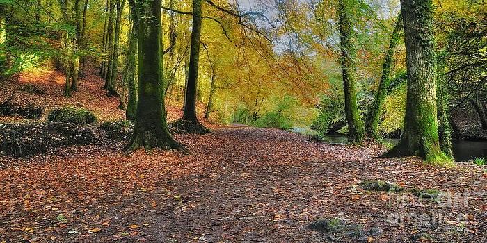 Autumn Walk by MickHay
