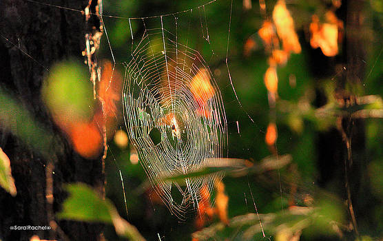 Autumn Web by Sarai Rachel