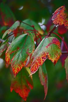 Michelle Cruz - Autumns Alluring Gift