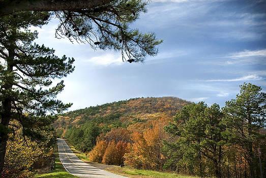 Autumns Glory by Cindy Rubin