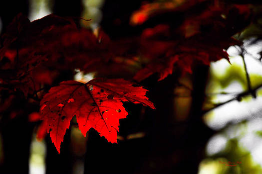 Darlene Bell - Autumn