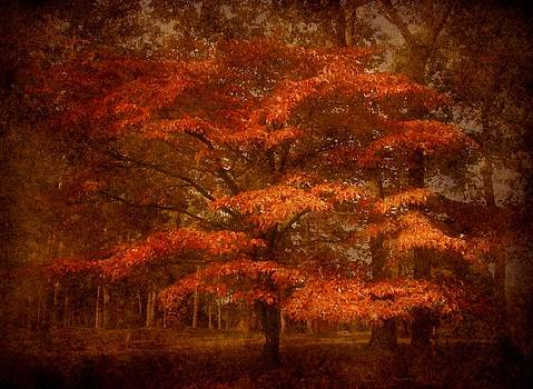 Autumn's Tradition - Ocean County Park by Angie Tirado
