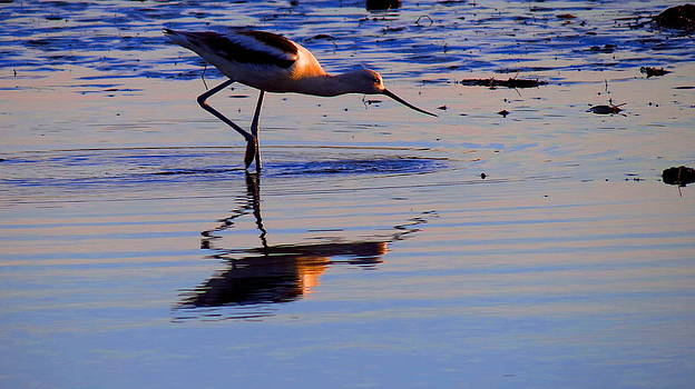 Avocet in the Dim Light by Catherine Natalia  Roche