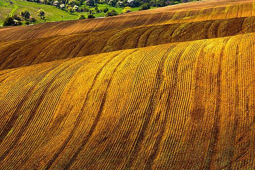 Awry Land by Evgeni Dinev
