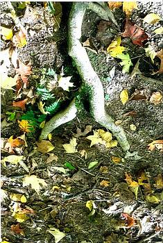 Ayin Tree Root by Suzanne Fenster