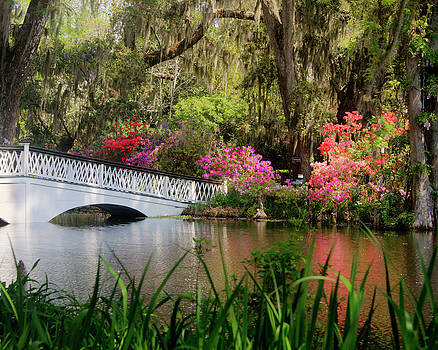 Terry Shoemaker - Azaleas and a Footbridge