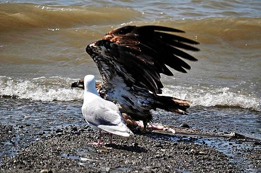 Debra  Miller - Baby Bald Eagle Movement