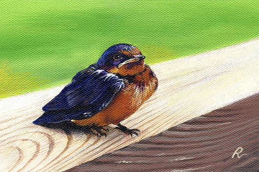 Baby Barn Swallow by Peggy Dreher