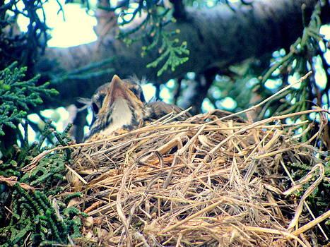 Baby Bird Curious  by Amy Bradley