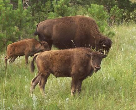Baby Buffalo by Christine Edwards