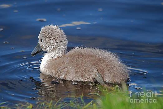 Baby by Doug Thwaites