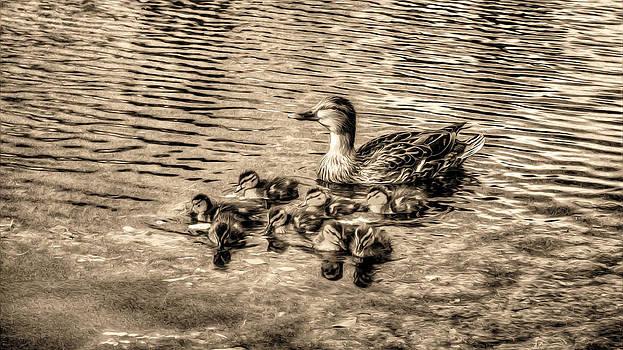 Baby Ducks - Sepia by Sergio Aguayo