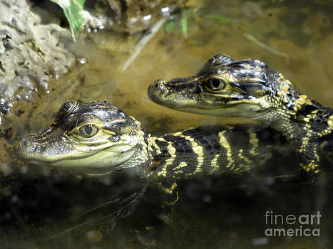 Anne Ferguson - Baby Gators