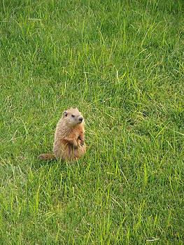 Kimberly Perry - Baby Groundhog