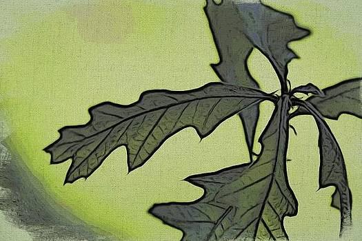 Baby Oak Leaves by Jennifer Woodworth