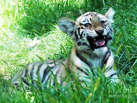 Anne Ferguson - Baby Siberian Tiger