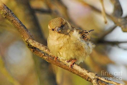 Baby Sparrow by Curtis Brackett