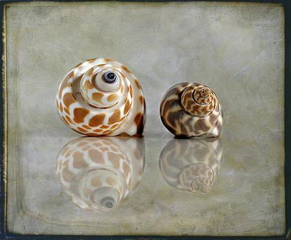Babylon Shells by Cindi Ressler