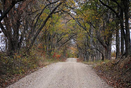Lisa Moore - Back Road Serenity