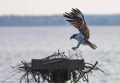 Back to the Nest  by Glenn Lawrence