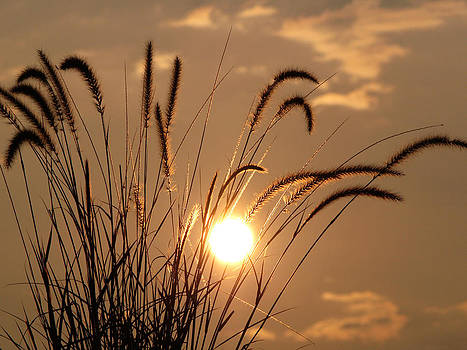 Backlit Grasses by Jeremy Allen