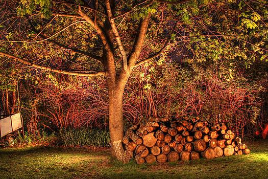 Backyard by Brian Dolan