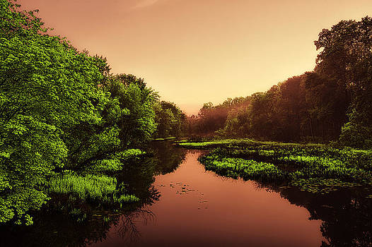 Backyard Jungle - 2 by Alhaji Samura