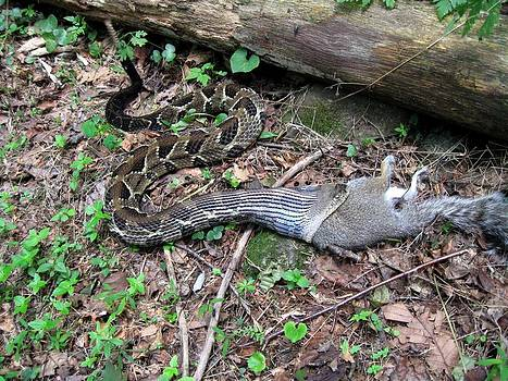 Bad Day in Squirrelville by Doug McPherson