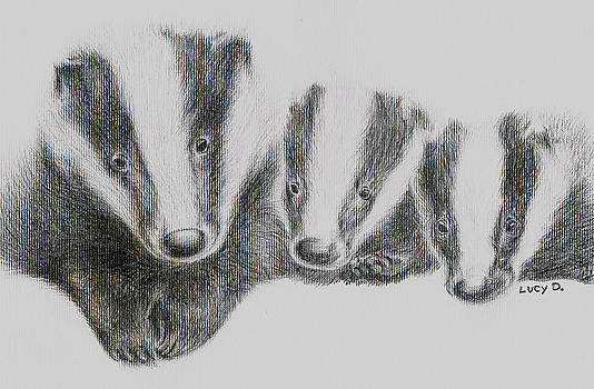 Badgers by Lucy D