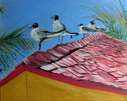 Bahama Gulls by Barbara Porto