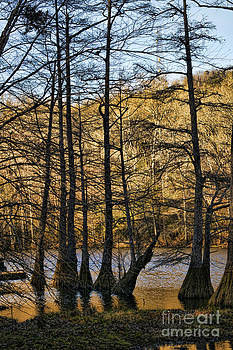 Diana Cox - Bald Cypress Grove