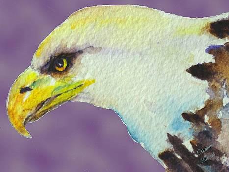 Bald Eagle by Corynne Hilbert