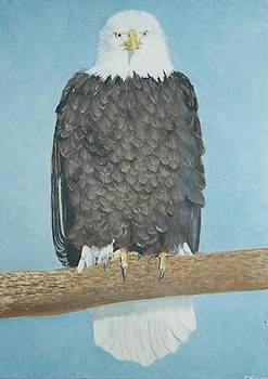 Bald Eagle II by Terry Forrest