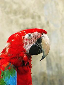Bali Parrot by Diane Geddes