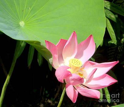 Balinese Flower by Samantha Mills