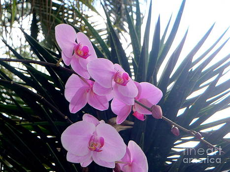 Balinese Orchids by Samantha Mills