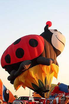 Gary Gingrich Galleries - Balloon-LadyBug-7616