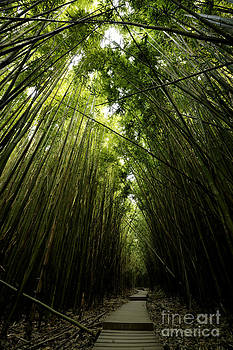 Bamboo Forest by Tom Cuccio