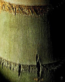 Bamboo Texture by Charles Dancik